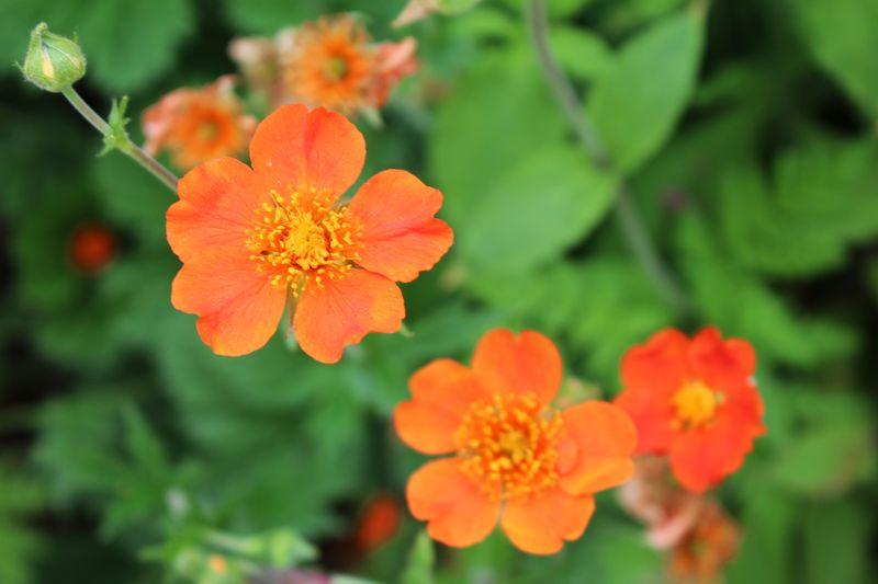 Orangge_Flower_Garden