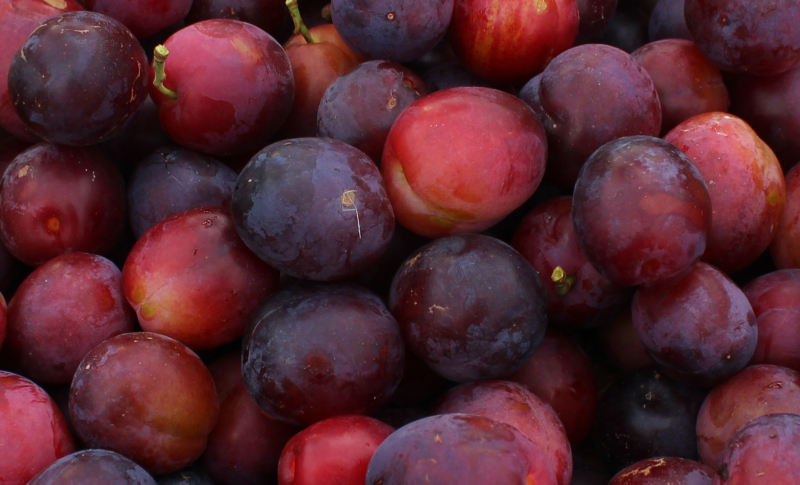 Plums_closeup