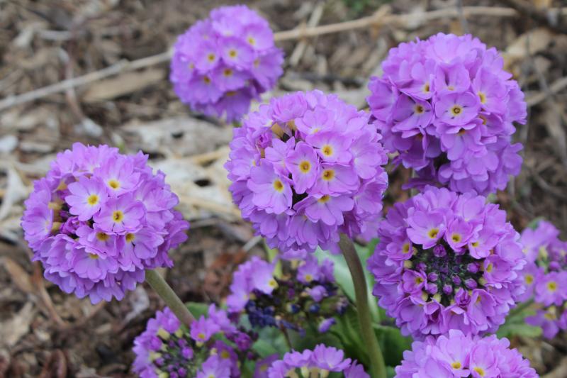 April_Flowers_7