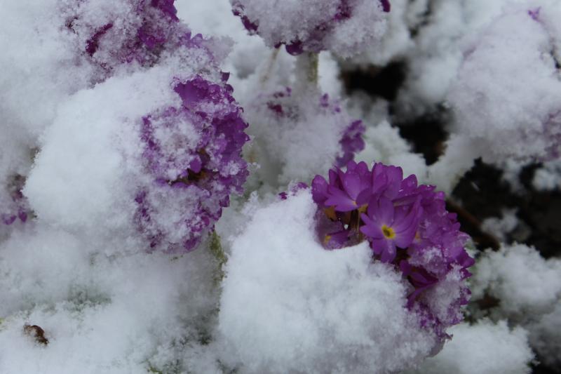Snow_April_2017_13
